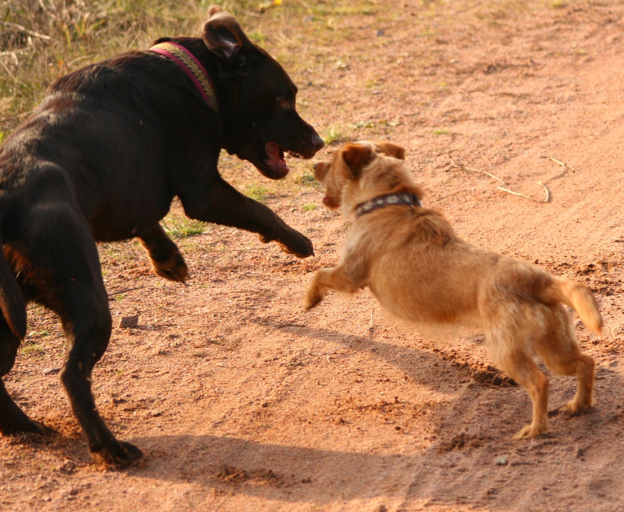Hundespiel2