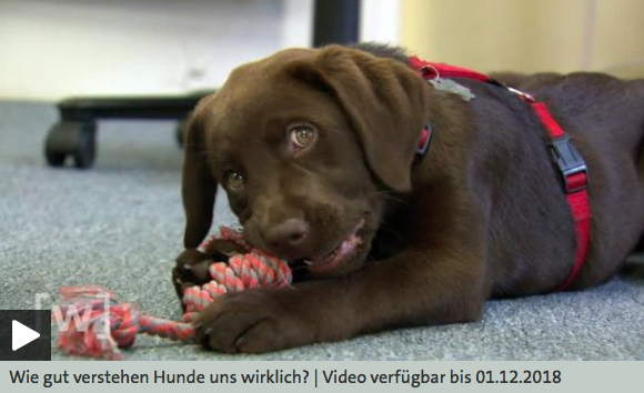 Wie gut verstehen uns Hunde wirklich?