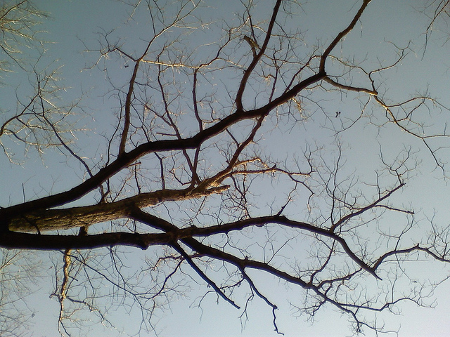 neuron branches