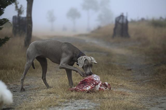 Hund_Fleisch