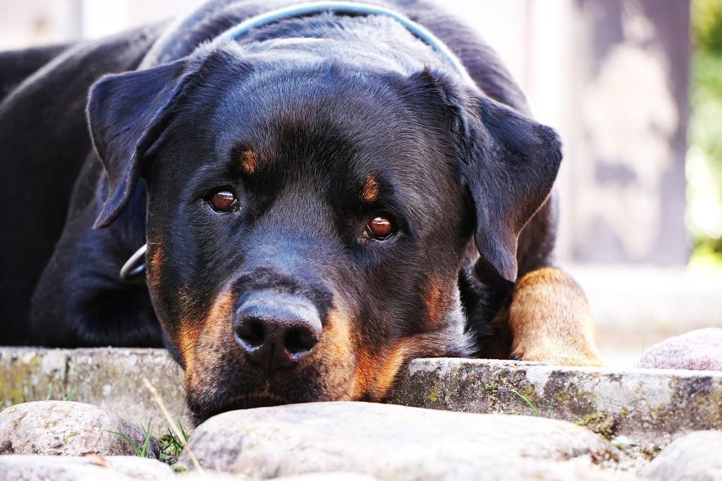 dog-1576497_1920