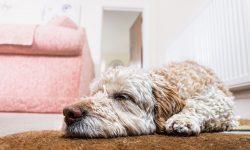 Relaxopet - wirklich wirksam oder Marketinggedöns?
